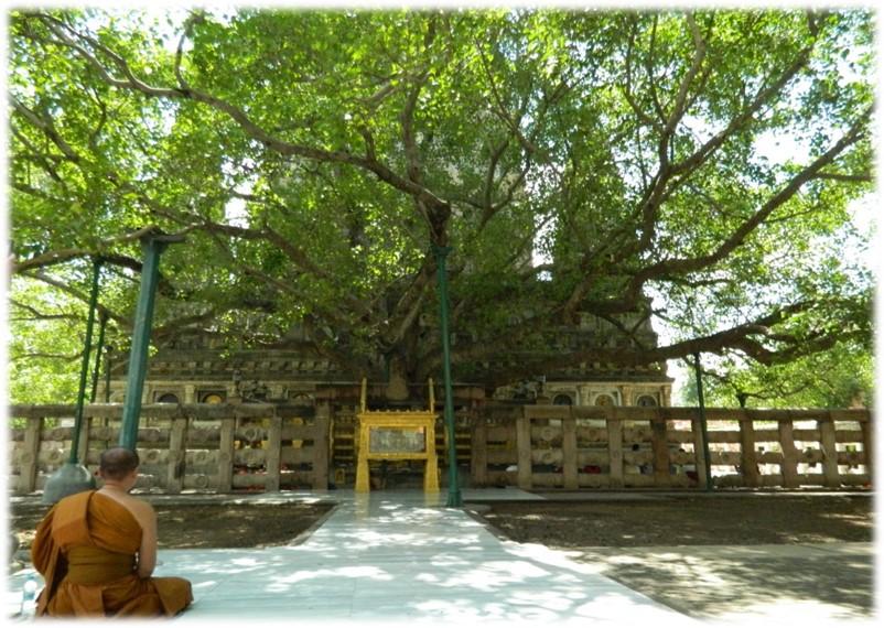 Bohi Yoga Tree